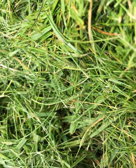 Motte ( détail-longs brins).jpg